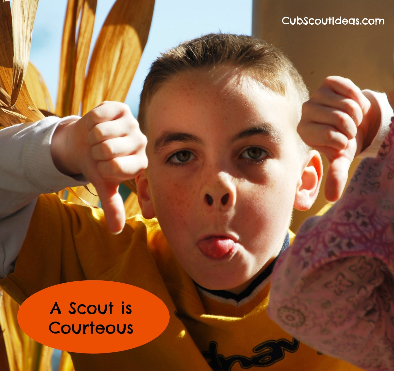 cub scout a scout is courteous