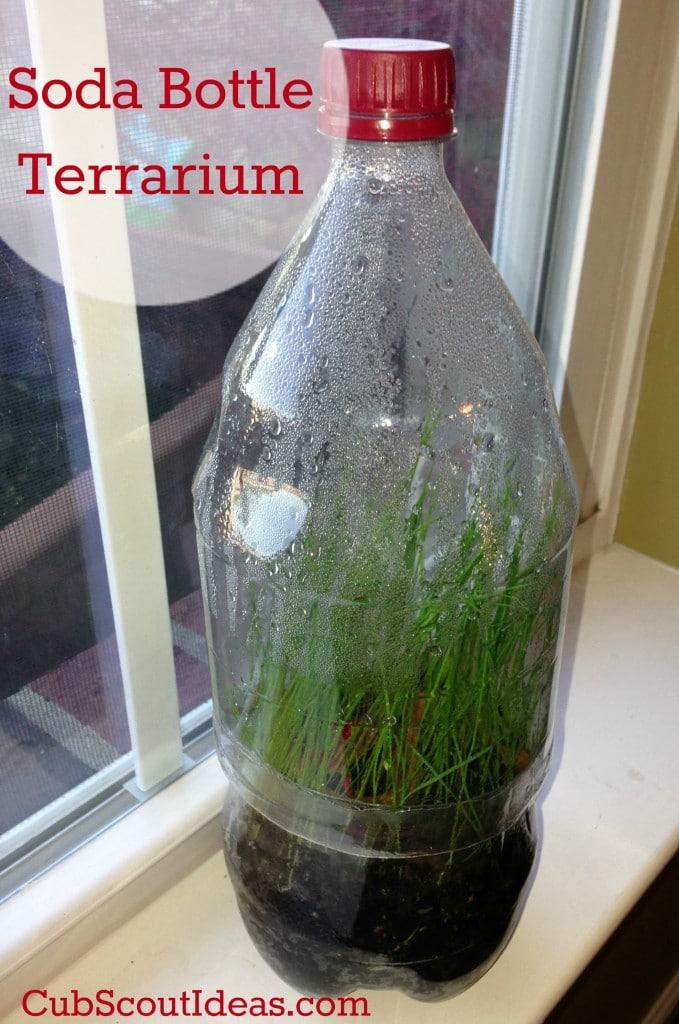 Webelos Naturalist Terrarium