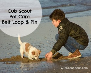 pet care belt loop