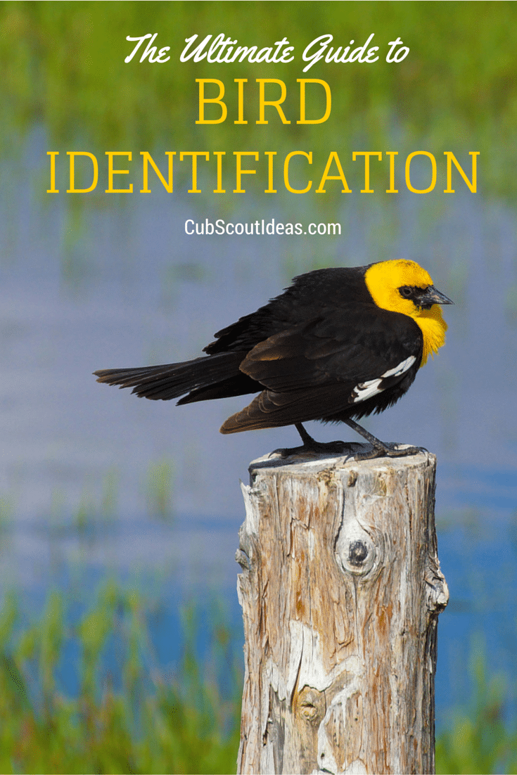 cub scout bird identification