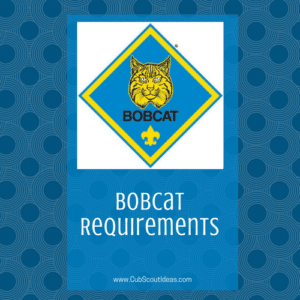 Bobcat Requirements square