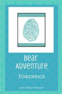Bear Forensics