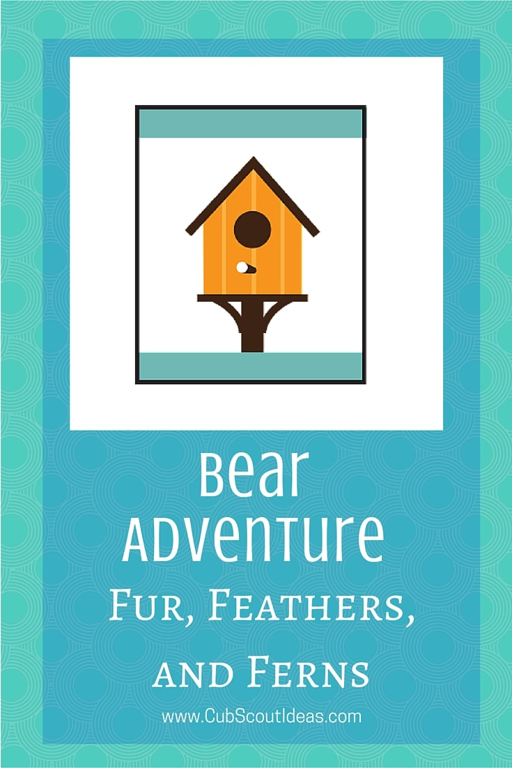 Bear Cub Scout Fur Feathers and Ferns