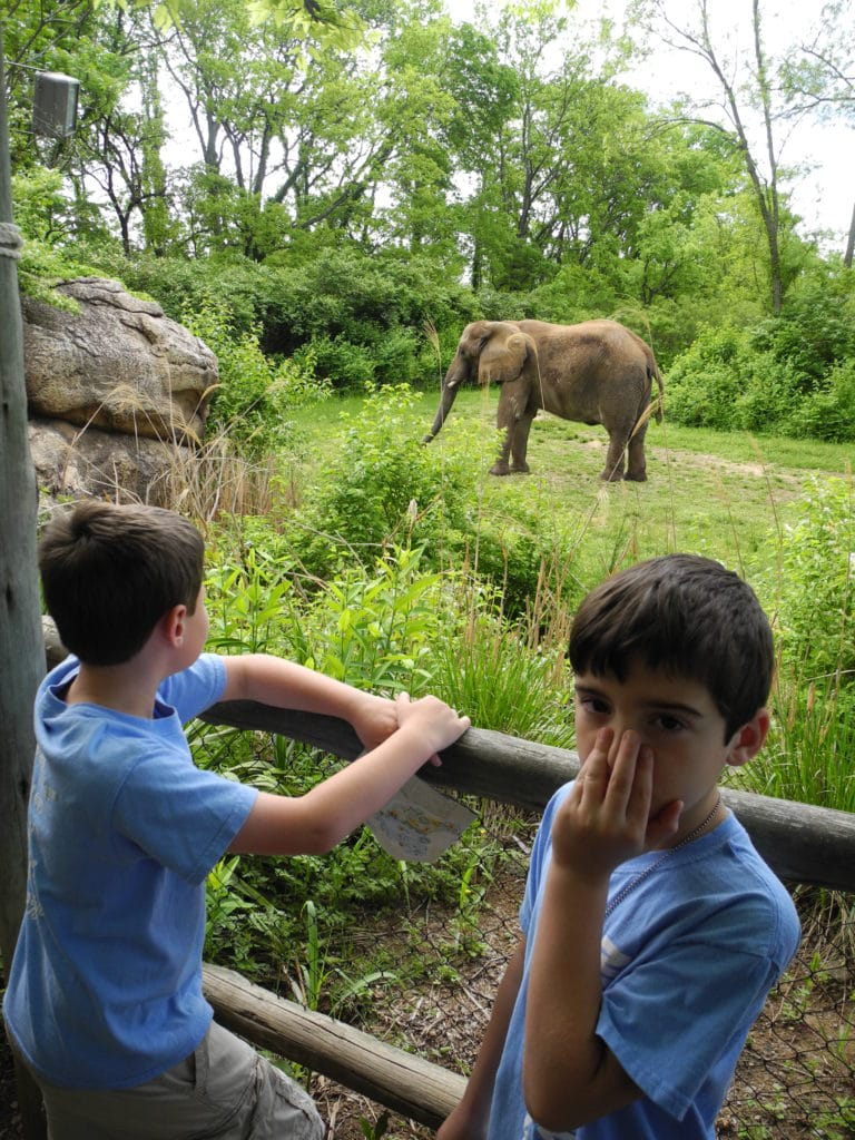 cub scout zoo trip for summertime pack award