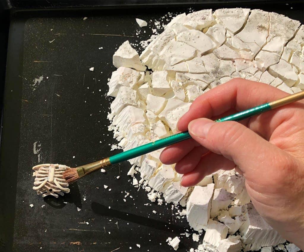 menemukan tulang dalam menggali dinosaurus pramuka