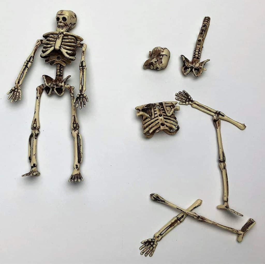 skeleton for cub scout dinosaur dig