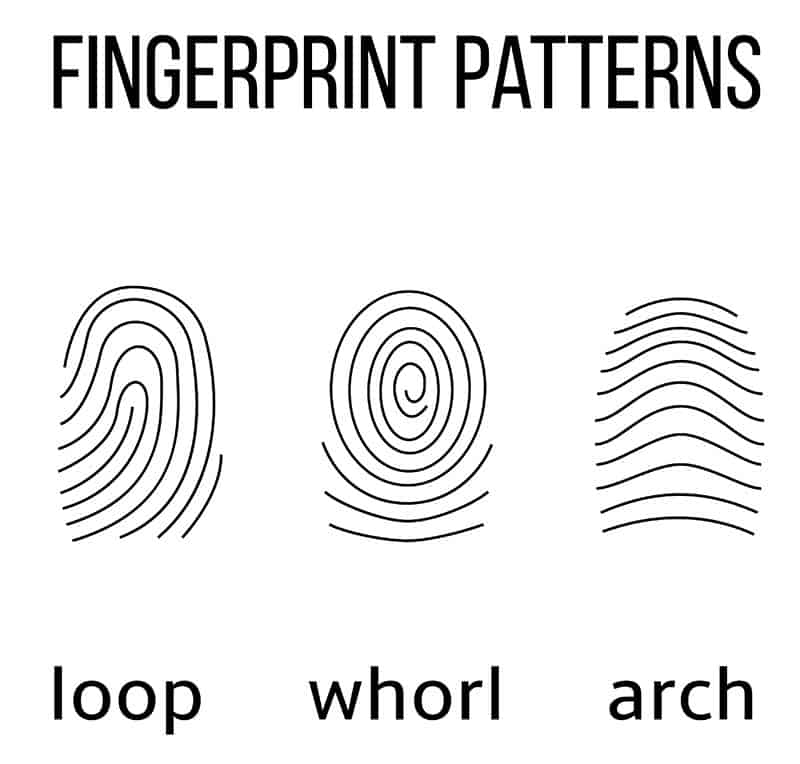 photograph about Printable Fingerprint Cards called How in the direction of Do a Youngsters Forensics Fingerprint Match Cub Scout
